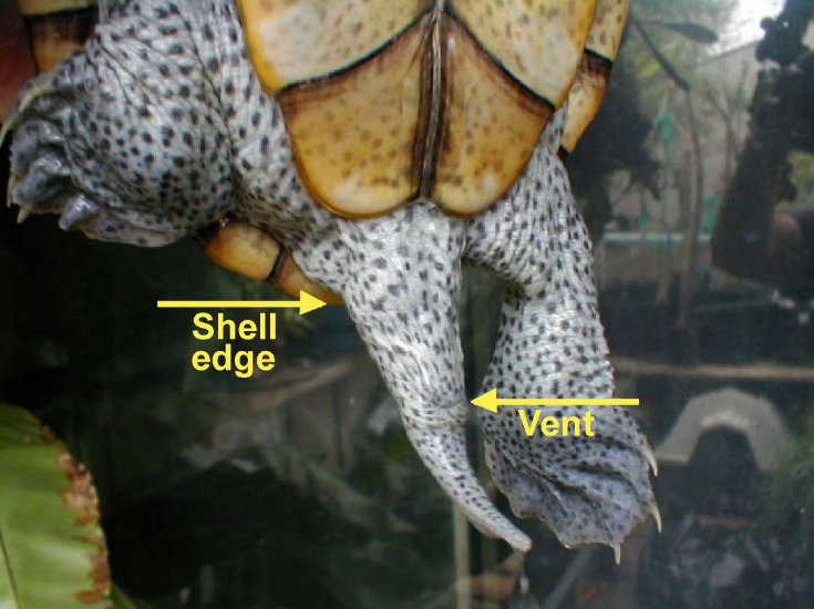 Baby diamondback terrapins for sale courts at fairfield
